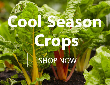Cool Season Crops for Sale
