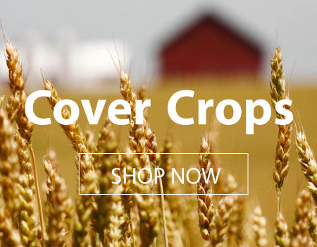 Bring your garden back to life with cover crops!