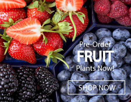 Fruit Plants for Sale