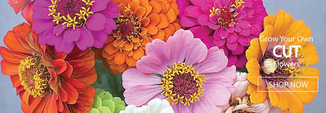 Cut Flower Seeds