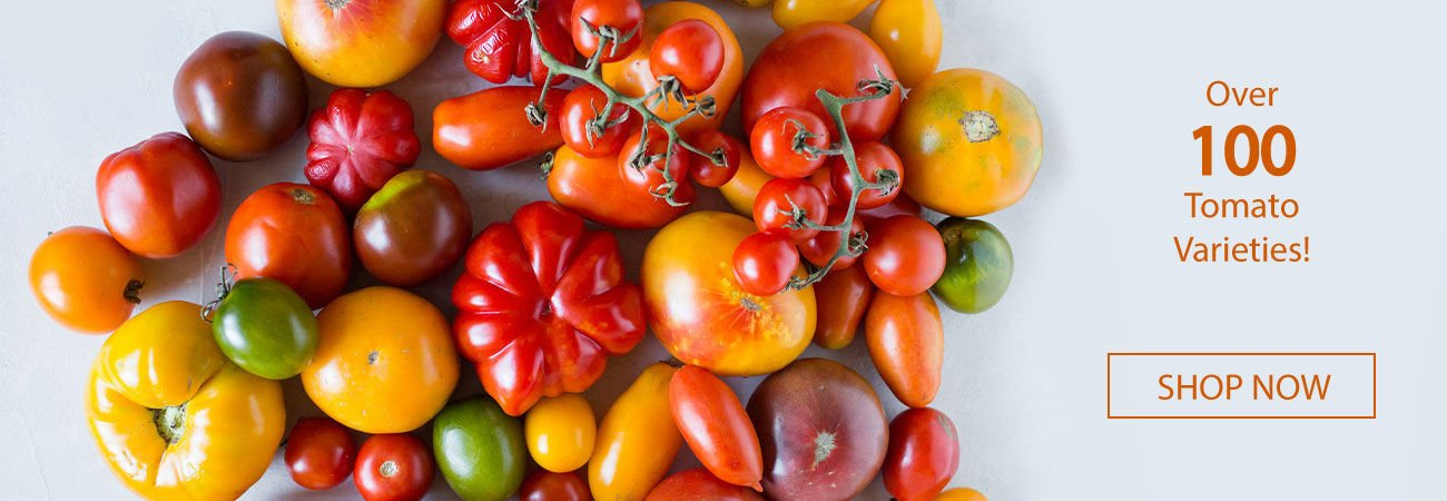 Urban Farmer has a wide variety of tomato seeds and plants