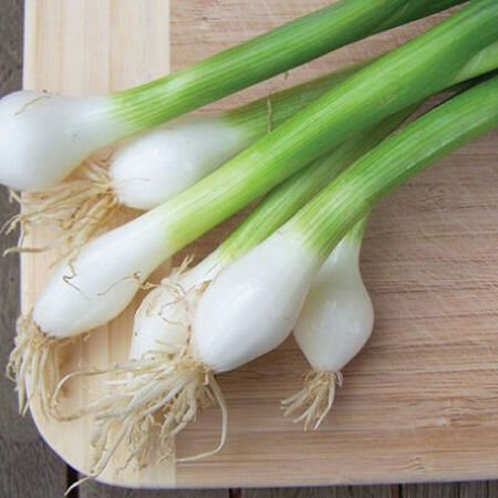 Tokyo Long Bunching, Onion Seeds - Packet image number null