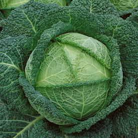 Savoy Perfection, Cabbage Seeds