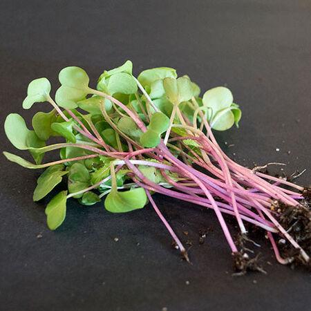 Hong Vit, Organic Radish Seeds - Packet image number null