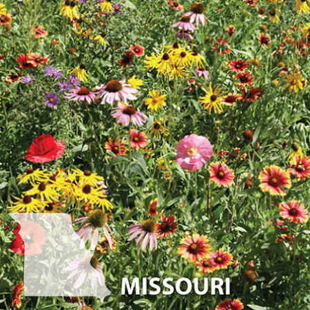 Missouri Blend, Wildflower Seed - 1 Ounce image number null