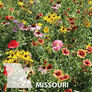 Missouri Blend, Wildflower Seed - 1 Ounce thumbnail number null