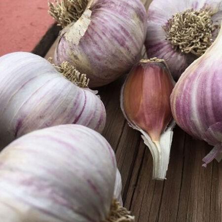 Chamisal Wild, Garlic Bulbs image number null