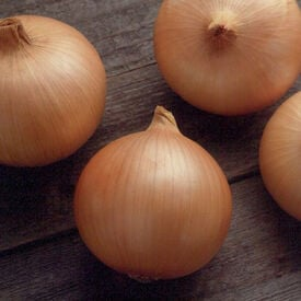 Candy, (F1) Onion Seeds