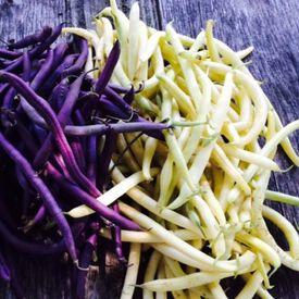 Mardi Gras Blend, Organic Bean Seeds