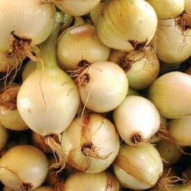 Walla Walla Sweet, Onion Seeds