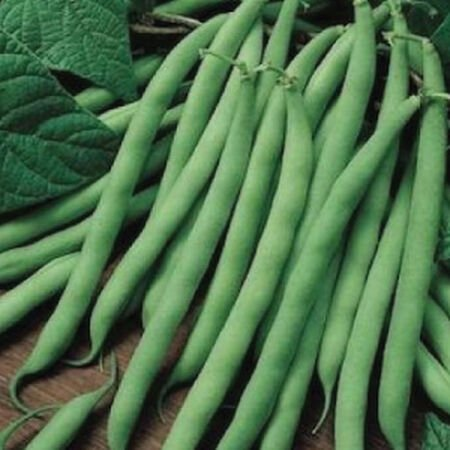 Blue Lake FM-1K Pole, Bean Seeds image number null