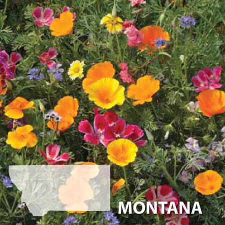 Montana Blend, Wildflower Seed - 1 Ounce image number null