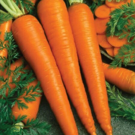 Imperator 58, Carrot Seeds - Packet image number null
