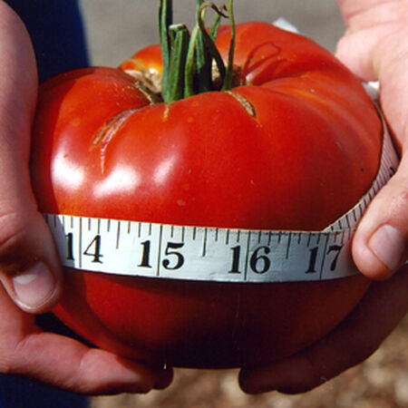 Delicious, Tomato Seeds - Packet image number null