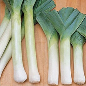 King Richard, Leeks