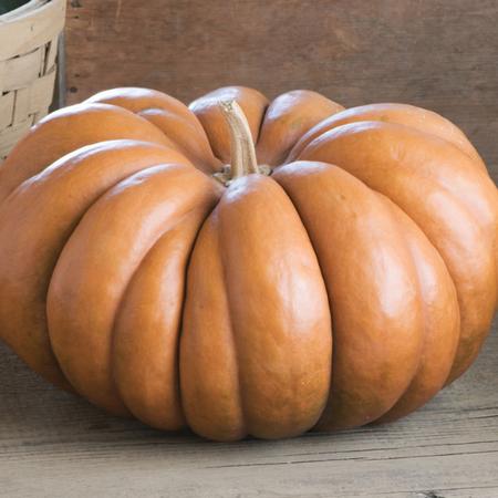 Fairytale, Pumpkin Seeds image number null