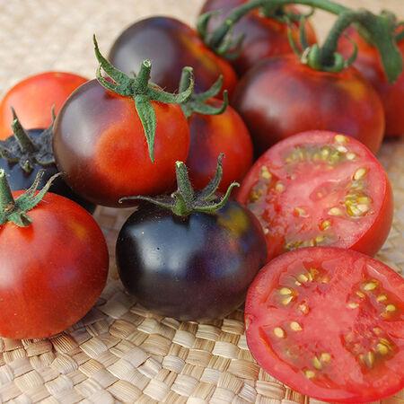 Indigo Clackamas Blueberry, Tomato Seeds - Packet image number null