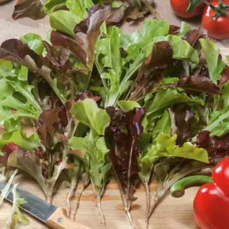 Bistro Blend, Lettuce Seeds image number null