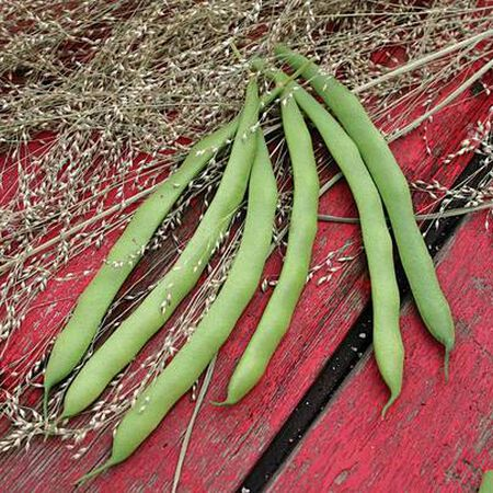 Kentucky Dreamer, Bean Seeds image number null