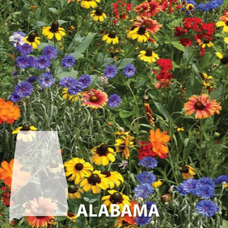 Alabama Blend, Wildflower Seed - 1 Ounce image number null