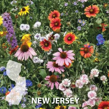 New Jersey Blend, Wildflower Seed - 1 Ounce image number null
