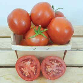 Moneymaker, Tomato Seeds