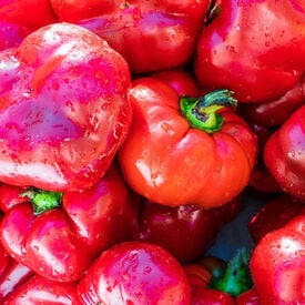 Ashe County Pimento, Pepper Seeds