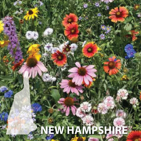 New Hampshire Blend, Wildflower Seed - 1 Ounce image number null