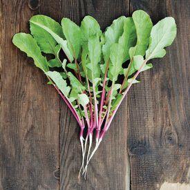Hong Vit, Radish Seeds