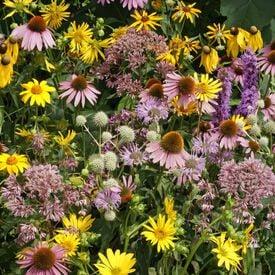 Tall Prairie Blend, Wildflower Seed