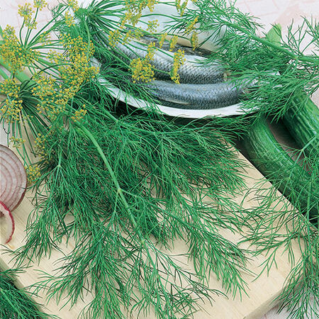 Bouquet, Organic Dill Seed - Packet image number null