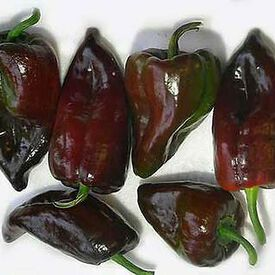 Mulato Isleno, Pepper Seeds
