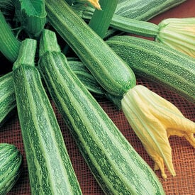 Cocozelle, Organic Zucchini Seeds