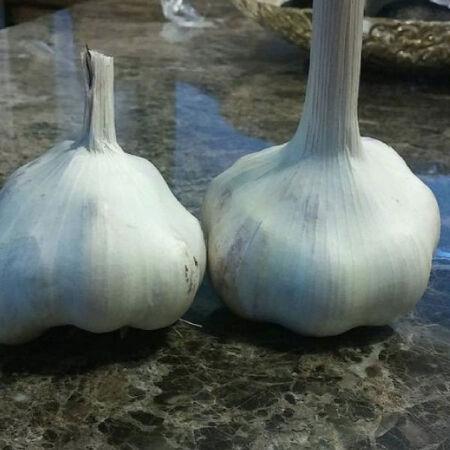 Mattchi, Garlic image number null