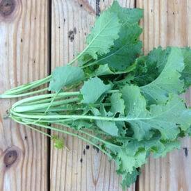 Dwarf Siberian, Kale Seed