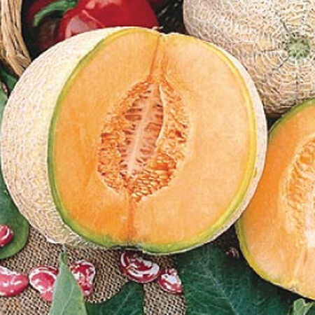 Edisto 47, Cantaloupe Seeds - Packet image number null