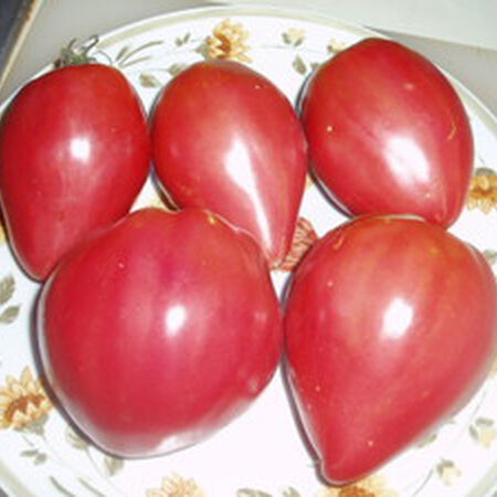 Pink Oxheart, Tomato Seeds - Packet image number null