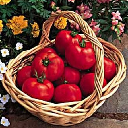 Early Doll, (F1) Tomato Seeds image number null