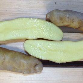 Banana Fingerling, Seed Potatoes