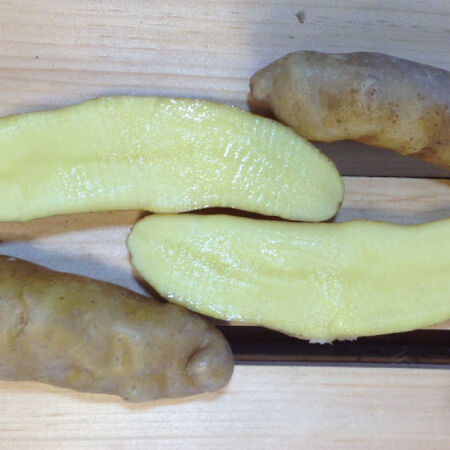 Banana Fingerling, Seed Potatoes - 2 Pounds image number null