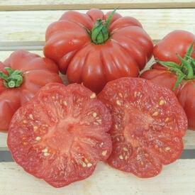Costoluto Genovese, Tomato Seeds