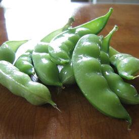 Dwarf Grey Sugar, Pea Seeds