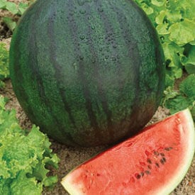 Bush Sugar Baby, Organic Watermelon Seeds