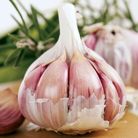 Inchelium Red, Garlic