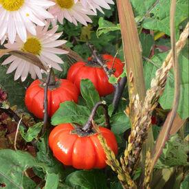 Pumpkin on a Stick, Eggplant Seeds