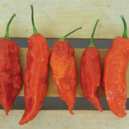 Red Bhut Jolokia (Ghost), Pepper Seeds - Packet image number null