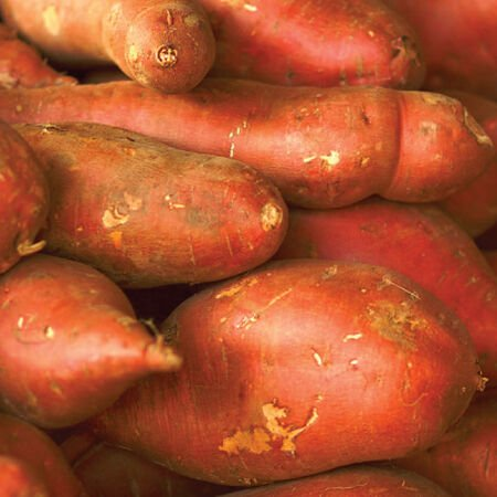 Georgia Jets, Sweet Potato Slips - 25 Potato Slips image number null