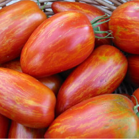 Speckled Roman, Organic Tomato Seeds - Packet image number null