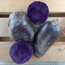 All Purple, Seed Potatoes