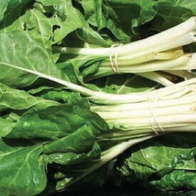Large White Ribbed, Swiss Chard Seeds